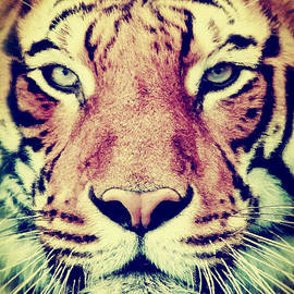 Angela Doelling AD DESIGN Photo and PhotoArt - Tiger Portrait 2