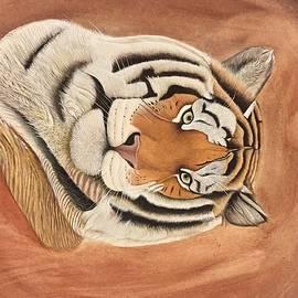 Unknown  - Tiger