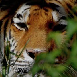 Ernie Echols - Tiger Waiting