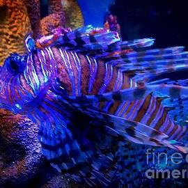 Anne Sands - Tigerfish