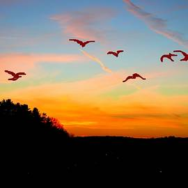 Anand Swaroop Manchiraju - Time To Fly Away
