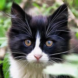 Sergey Lukashin - Timka kitten