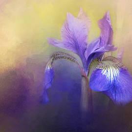 Jai Johnson - Tiny Iris