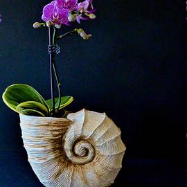 Barbara Zahno - Tiny Purple Orchid