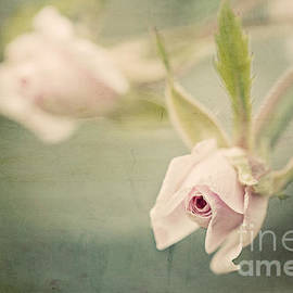 Linda Lees - Tiny Roses