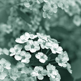 Jennie Marie Schell - Tiny Spirea Flowers in Teal