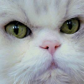 Lori Pessin Lafargue - Tobias the Cat