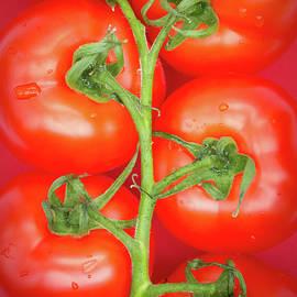 Tomato Tree - Wim Lanclus