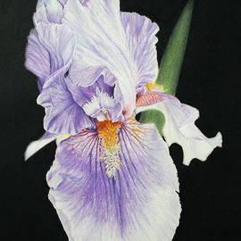 Marna Edwards Flavell - Tonto Basin Iris