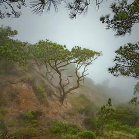 Torrey Pines Marine layer - Joseph Smith