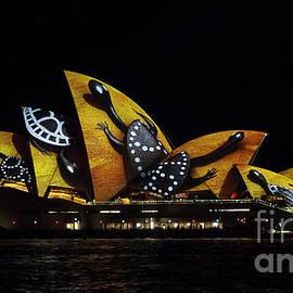 Bryan Freeman - Tortoise Sails - Sydney Vivid Fesatival