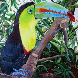 Marilyn McNish - Toucan Portrait