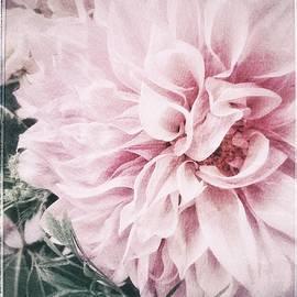 Jill Love - Touch of Blush