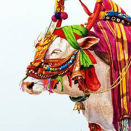Jeyaprakash M - Traditional Bull