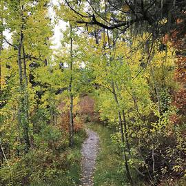 Nancy Worrell - Trail to Treasure Falls