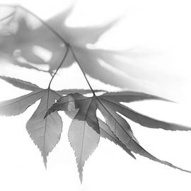 Jennie Marie Schell - Translucent Gray Leaves