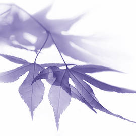 Jennie Marie Schell - Translucent Purple Leaves