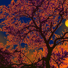 Bliss Of Art - Tree and the moon