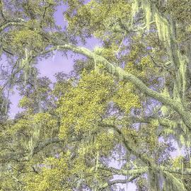 Louise Hill - Tree Art