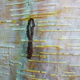 Olga Zavgorodnya - Tree Bark Abstract 8