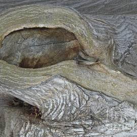 Nili Tochner - Tree barks no.4