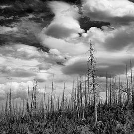 Allan Van Gasbeck - Tree Drama