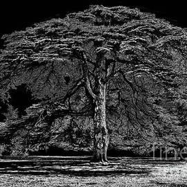 Walt Foegelle - Tree in England
