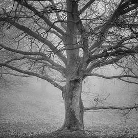Peter Acs - Tree in the mist