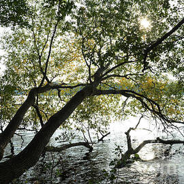 Tree in water - SK Pfphotography