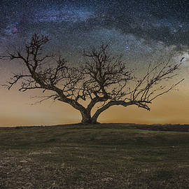 Aaron J Groen - Tree of Happiness