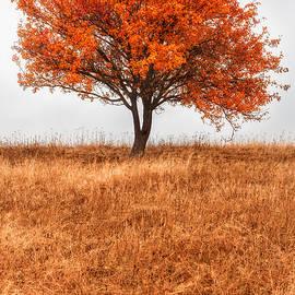 Catalin Fudulu - Tree of immortality