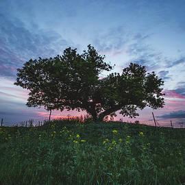 Aaron J Groen - Tree of Life