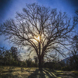 Mitch Shindelbower - Tree Of Life