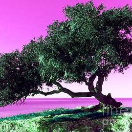 Tap On Photo - Tree Of Life - 1