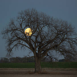 Aaron J Groen - Tree of Supermoon