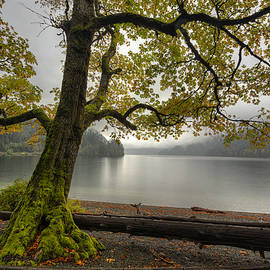 Tree on Cameron Lake - Mark Kiver