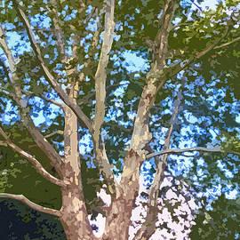Jean Hall - Tree on The Common