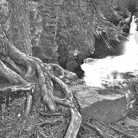 Rory Cubel - Tree Roots At cascade River Falls   Black and White  Minnesota