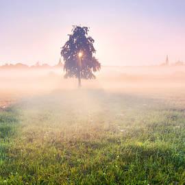 Stanislav Salamanov - Tree soul