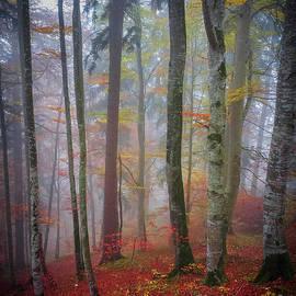 Elena Elisseeva - Tree trunks in fog
