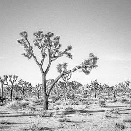 Alex Snay - Tree Valley