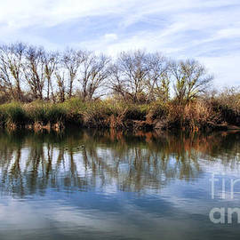 Jerry Cowart - Trees and Clouds Reflection on Wildlife Reserve Pond