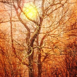 Debra and Dave Vanderlaan - Trees at Sunset