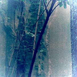 Tony Grider - Trees Growing in Silo - Square 2015 Edition