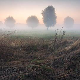 Stanislav Salamanov - Trees in Morning Mist on Meadow at Sunrise