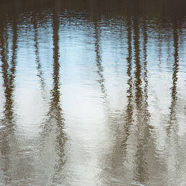 Karol Livote - Trees On The Water