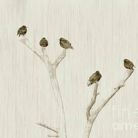 Benanne Stiens - Treetop Starlings