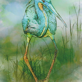 Patti Deters - Tri-Color Heron Balancing Act - Colorized