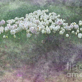 Kaye Menner - Triangle of White Tulips by Kaye Menner
