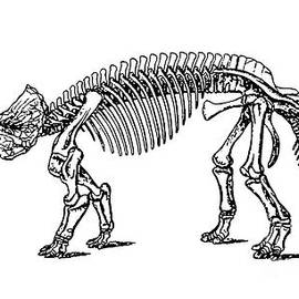 Triceratops Dinosaur Tee - Edward Fielding